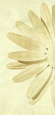 Lh Daisey Art Print by Jim  Hatch