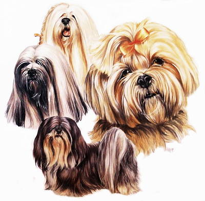 Sporting Mixed Media - Lhasa Apso by Barbara Keith