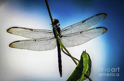 Libellule Photograph - Libellule Le Bleu by Patrick Dablow