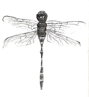Drawing - Libelula  Dragonfly by Sandra Rincon