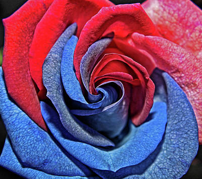 Photograph - Liberty Rose by Judy Vincent