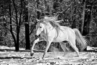 Photograph - Liberty Stallion by Wes and Dotty Weber