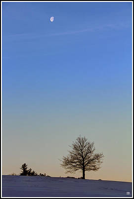 Photograph - Liberty Tree And Moon by John Meader