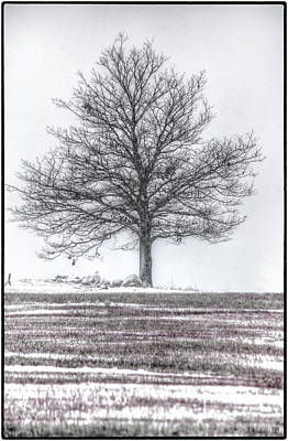 Photograph - Liberty Tree First Snow by John Meader