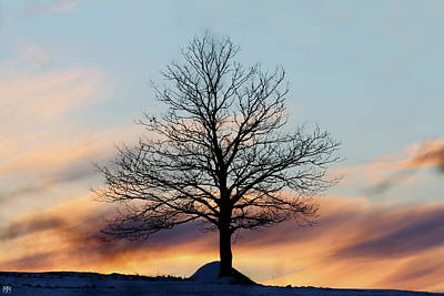 Photograph - Liberty Tree Sunset by John Meader