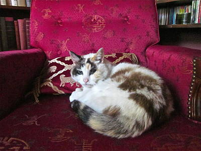Of Calico Cats Photograph - Librarian by Gwyn Newcombe