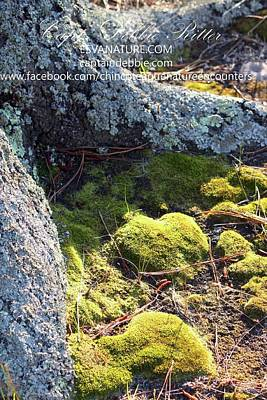 Photograph - Lichen And Moss by Captain Debbie Ritter