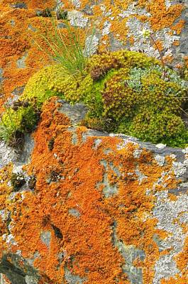 Photograph - Lichen And Moss Garden by Frank Townsley