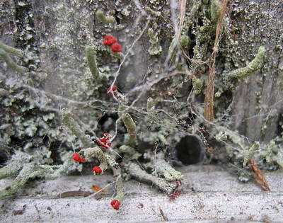 Photograph - Lichen And Old Fence #1 by Dreamweaver Gallery