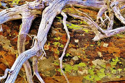 Photograph - Lichen Art by Michele Penner