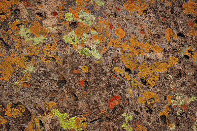 Photograph - Lichen At Bandelier - New Mexico by Stuart Litoff