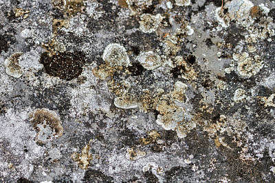 Photograph - Lichen At The Cemetery by Stuart Litoff