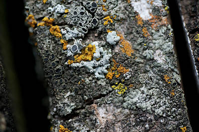 Still Live Photograph - Lichen At The Top by Wilma  Birdwell