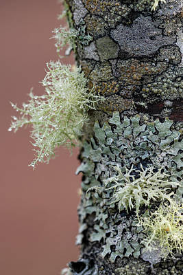 Photograph - Lichen Colony by Robert Potts