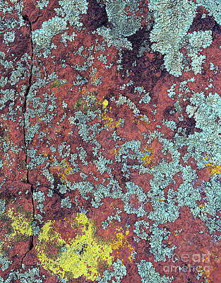 Photograph - Lichen Colors by Todd Breitling