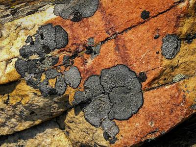 Photograph - Lichen Design By Jean Noren by Jean Noren