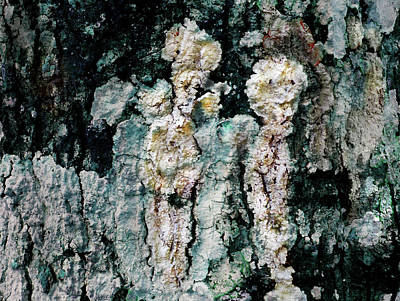 Photograph - Lichen by Ed Meredith