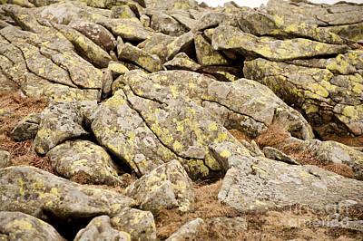 Lichen Grow On Stones Art Print by Arletta Cwalina
