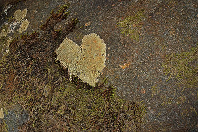 Crustose Photograph - Lichen Love by Mike Eingle