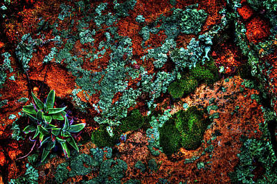 Photograph - Lichen, Moss And Desert Sage by Roger Passman