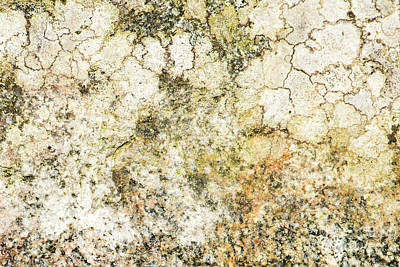 Photograph - Lichen On A Stone, Background by Torbjorn Swenelius