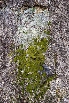 Photograph - Lichen On Granite by Steven Ralser
