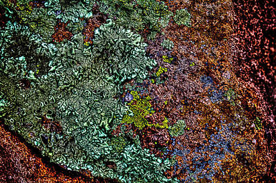 Photograph - Lichen On Red Rock by Roger Passman