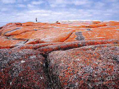 Photograph - Lichen On Rocks Bay Of Fires  by Lexa Harpell