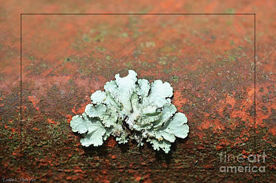 Photograph - Lichen On Rust by Debbie Portwood