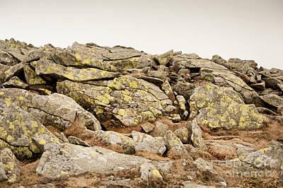 Lichen On Stones Slabs Art Print by Arletta Cwalina