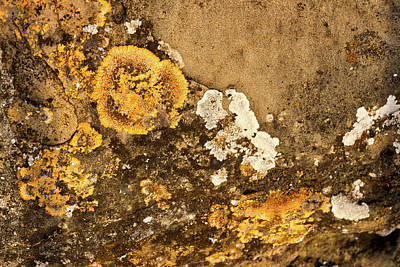 Photograph - Lichen On The Piran Walls by Stuart Litoff
