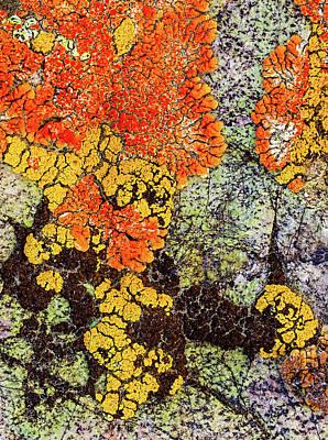 Photograph - Lichen Palette by Jean Noren