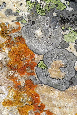 Photograph - Lichen Patterns by Frank Townsley