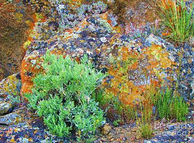 Photograph - Lichen Rainbow   by Michele Penner