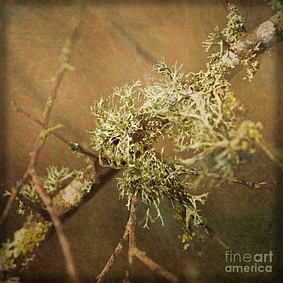 Photograph - Lichen Square Format by Liz Alderdice