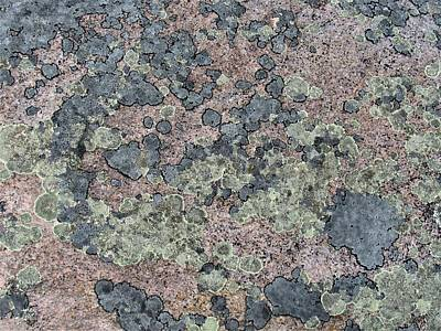 Photograph - Lichen Stone Design by Joshua Bales