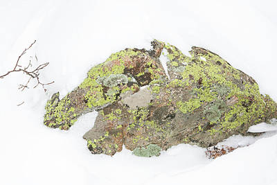 Photograph - Lichen Survival by Marilyn Hunt