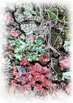 Photograph - Lichen The Holidays by John Hintz