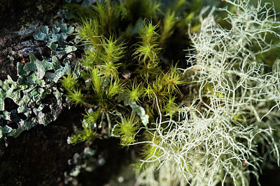 Photograph - Lichens And Moss by Robert Potts