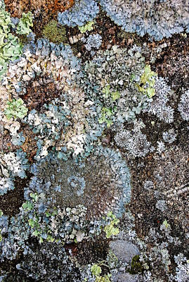 Digital Art - Lichens by Julian Perry