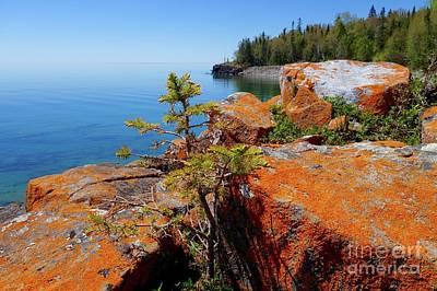 Photograph - Lichens On The Shoreline by Sandra Updyke