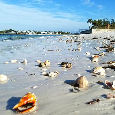 Photograph - Lido Beach Sea Shells 1 by Lou Ann Bagnall