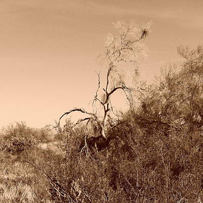 Photograph - Life And Death In The Desert - Art By Bill Tomsa by Bill Tomsa