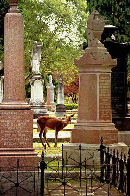 Photograph - Life And Death - Ross Bay Cemetery by Peggy Collins