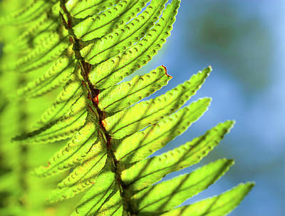 Photograph - Life Behind The Fern by T Brian Jones