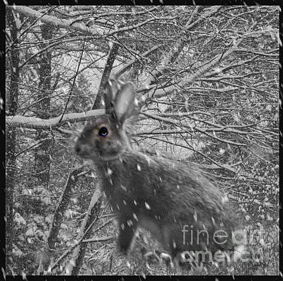 Photograph - Life Can Get Complicated by Barbara S Nickerson
