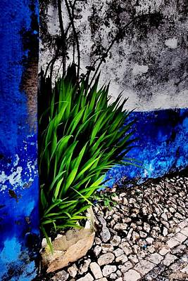 Photograph - Life Can Paint by Dora Hathazi Mendes