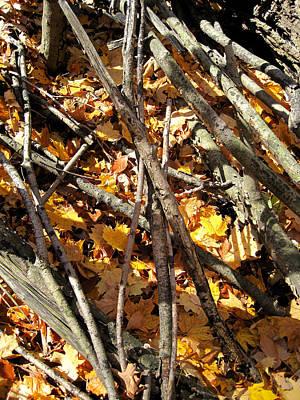 Autumn Leaf Photograph - Life Circle  by Leon Zernitsky