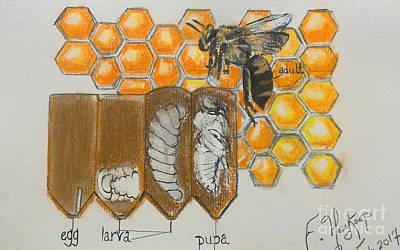 Pastel - Life Cycle Of A Bee  by Francine Heykoop