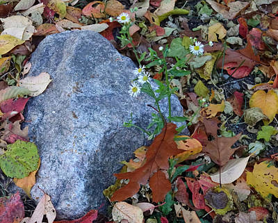 Photograph - Life Death And A Rock by Lori Pessin Lafargue